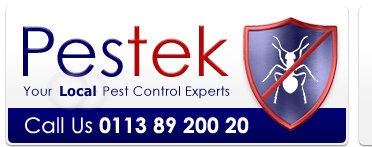 Pestek Pest Control are a professional pest control company in Leeds West Yorkshire.